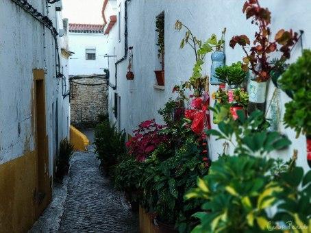Flores situadas en las paredes del Barrio Judío.